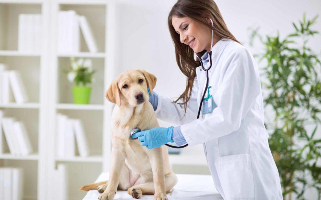 examen médico a una mascota